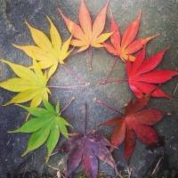 PicPost: Life Cycle of a Leaf