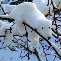 PicPost: Hi Polar