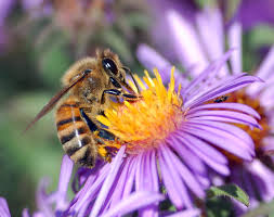 Plant nectar- rich flowers to attract pollinators