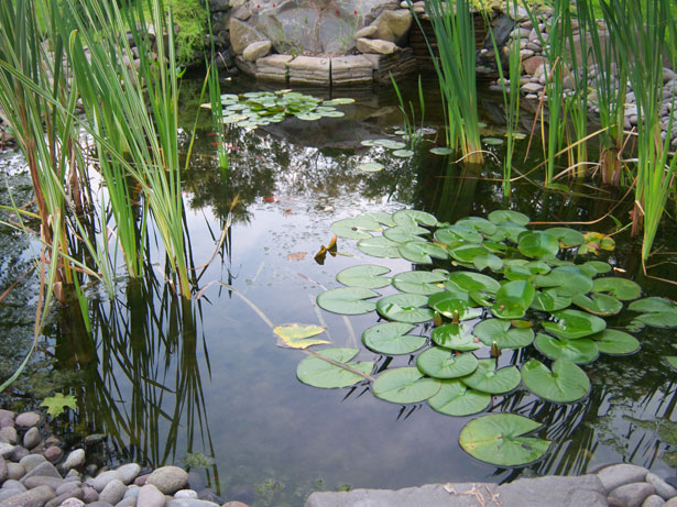 A pond is a fantastic resource for wildlife