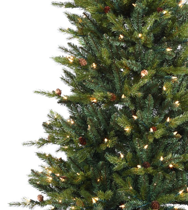 A living Christmas Tree this year? In some places you can rent them!