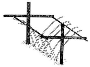 A cross bar system for supporting raspberry canes via e-how. This enables one or two rows of plants to be trained to form a dense 'hedge'