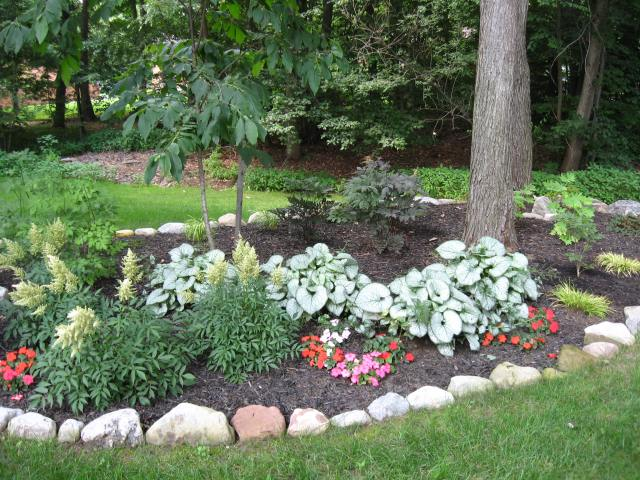 Depending on the shade amd soil conditions many plants can be grown under trees