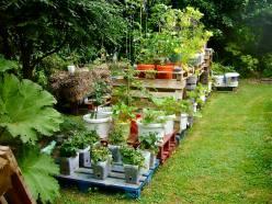 An experimental pallet garden..