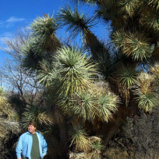 Joshua Tree at Grapevine Springs Ranch, Arizona