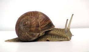 Snail Farming?