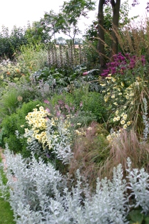 Mixed borders at Old School Garden- looser feel with evergreen shrubs, grasses and mixed hedges as a backdrop