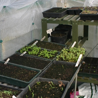 Greenhouse starting to fill..