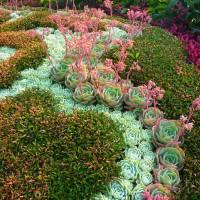 PicPost: Succulent Swirls