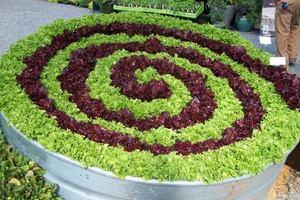 Planting Patterns #1