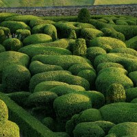 Planting Patterns #7