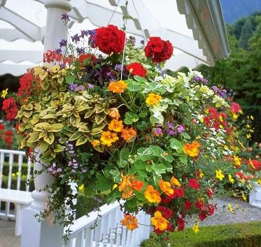 Hanging baskets can be planted up as the weather warms, but protect against late frosts.
