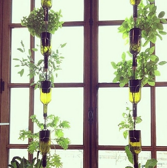 hanging bottle gadn via urban organic gardener