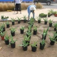 Planting Patterns #15