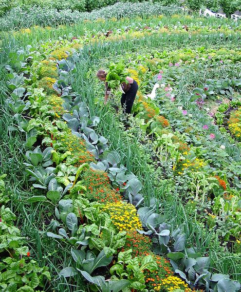 Planting Patterns #13