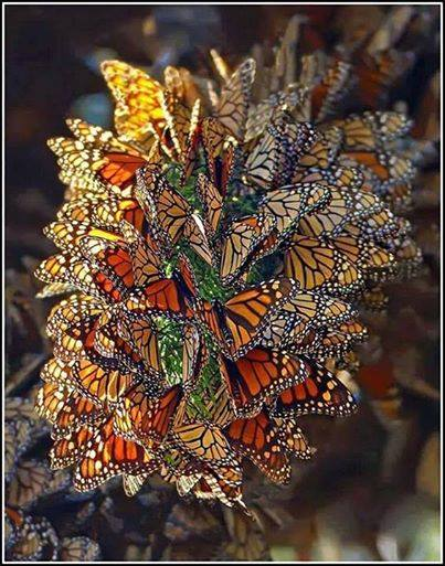 butterfly bouquet via green renaissance