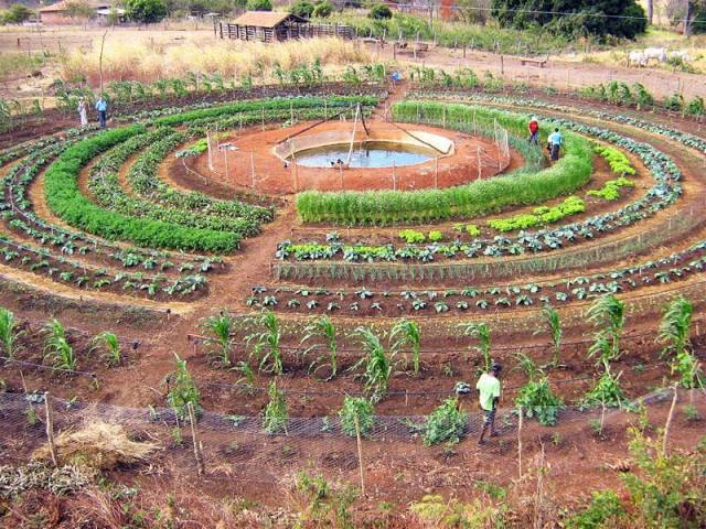 planting pattern food