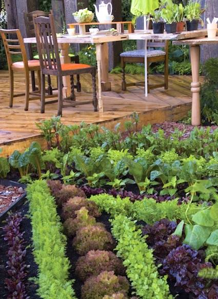 urban lettuce patterns via urban gardens
