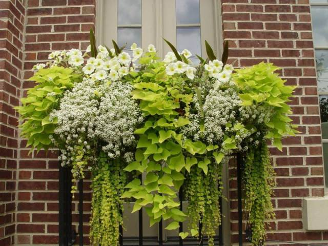window box planting pattern by Deborah Silver and Co.
