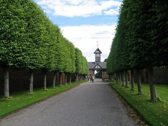 The Lime Walk at Arley Hall, Cheshire, an example of pleaching