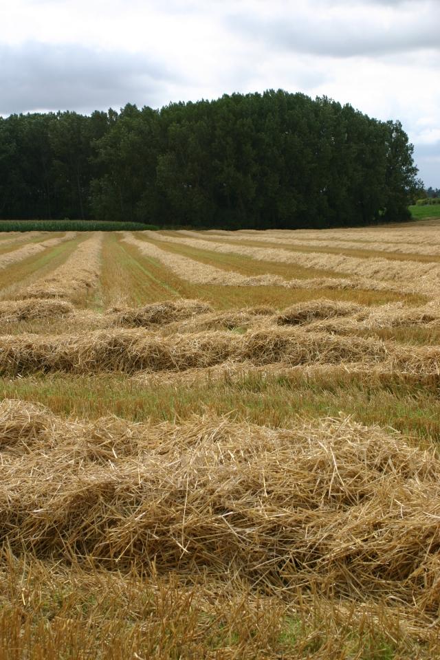 Newly-harvested fields opposite Old School Garden