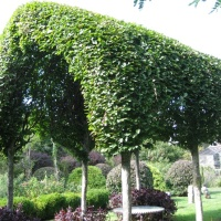 GQT: Pleached hedges