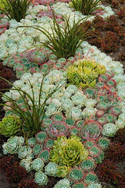 succulent pattern flow