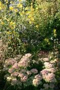 Helianthemum, echinops, sedum and grasses in the terrace border