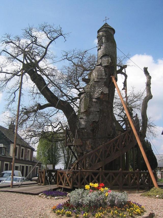 Oak chapel at Allouville Bellefosse, via The Woodland Trust