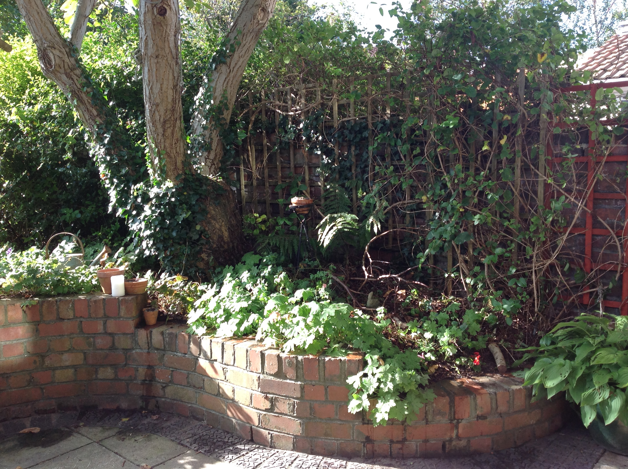 Landscaping around walnut trees : Gqt underneath the walnut tree what to plant old