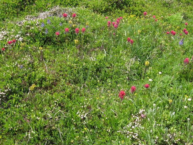 'Wild Gardens' have a different kind of attractiveness - and value- to those that are more actively 'gardened'