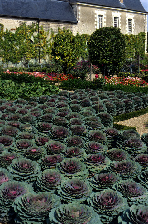 kale-at-the-chateau-villandry