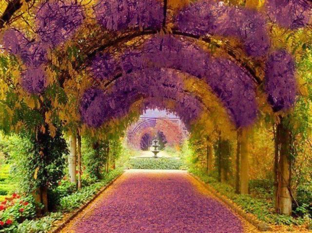 Purple and Yellow tunnel sociedad argentina de horticultura