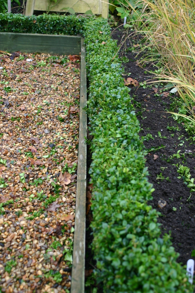 Box (h)edging tidied up in the kitchen garden