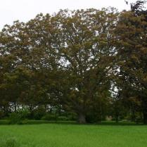 Walnut through the seasons....