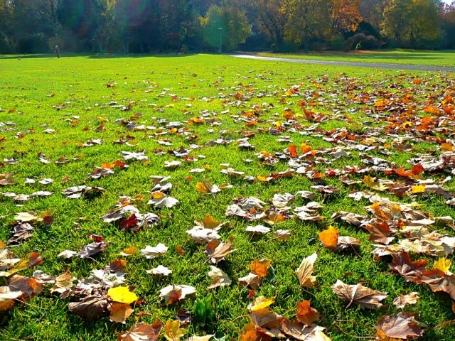 fall-lawn1