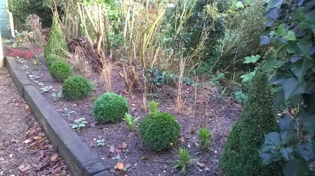The newly planted border