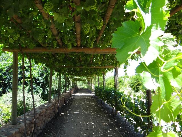 The Beautiful Babylonstoren Garden