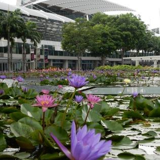 Australia and Singapore 2014 504