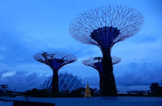 Australia and Singapore 2014 533