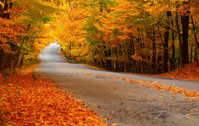 autumn-beech-leaves-fallen