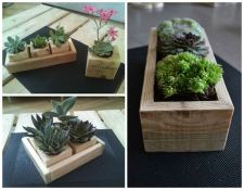 Planters for succulents