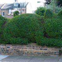 Topiary- Love or Hate?