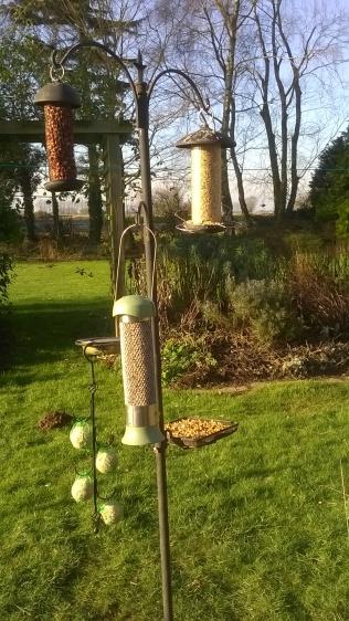 Keeping the birds happy