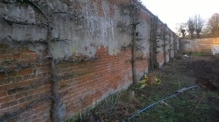 Two walls have a good range of espaliers; the plan is to put up new wooden battens and wires to support them anda completely new range along the west facing wall