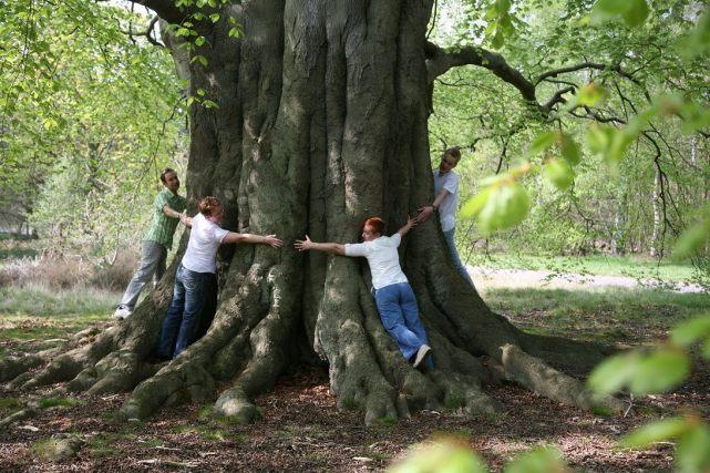 beech tree clumber park woodland trust