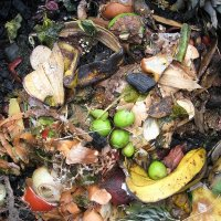 Great Compost= Great Soil= Great Gardens!