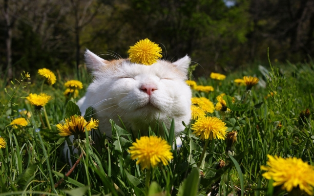 cat in clover