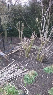 Pruning underway in the double borders