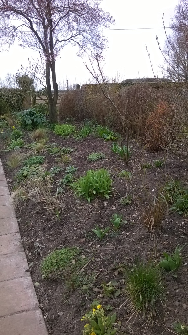 One of the Terrace Mixed borders, newly 'tickled' and starting to green up